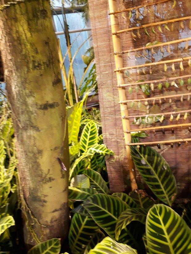 Tropiikin ihmeitä