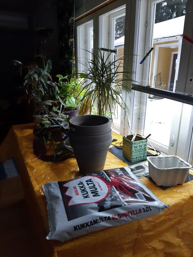Kevätkauden avaus: istutuspöytäolkkariin